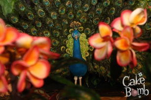 Rosie's peacock peeks through the frangipani