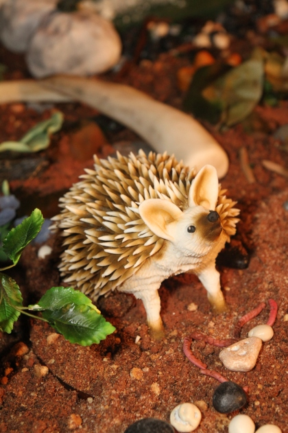 Long eared hedgehog by Molly Robbins