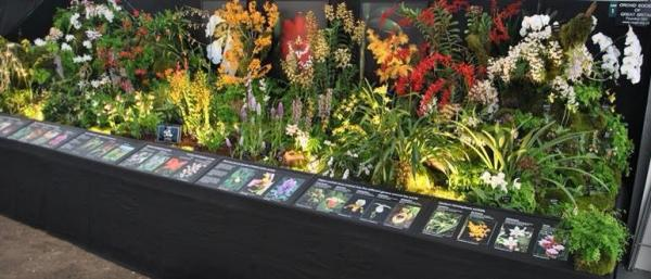 The Orchid Society of Great Britain's Gold Award Winning display